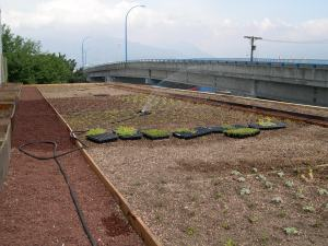 The green roof being planted.